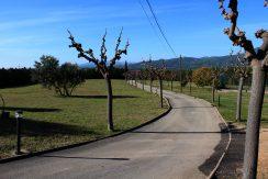 Camino2